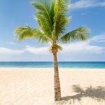 Palm Beach by Davin Phelps