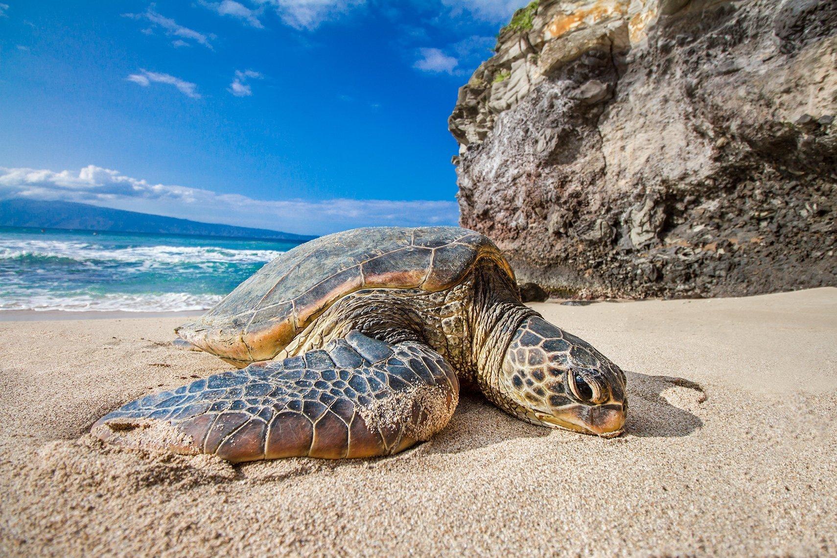 Turtle Beach by Davin Phelps
