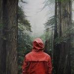 Red Bear by Adam Hall