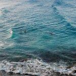 Surfscape Austrailia by Mike Leonard