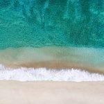 Palm Shadow by Davin Phelps